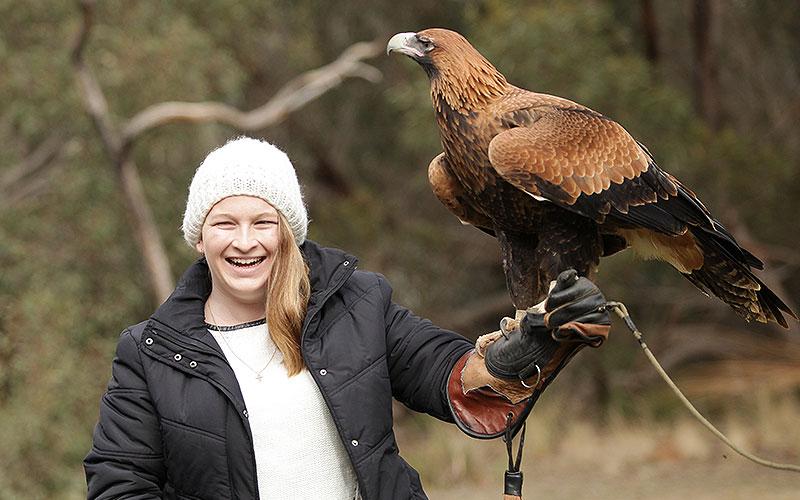 kangaroo island raptor domain wildlife birds eagle experience